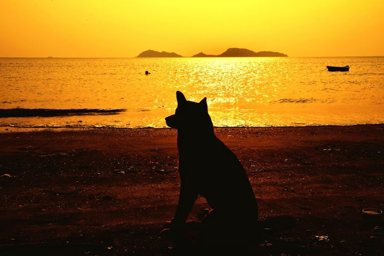 Silhouette cat sitting on beach during sunset