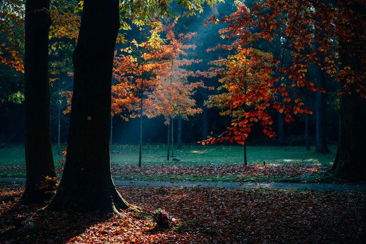 Kölner Ostfriedhof im Herbst Autumn Mood Trees Bäume Herbst Herbststimmung Wald Wood Waldspaziergang Leaves Nature Blätter Blätterpracht