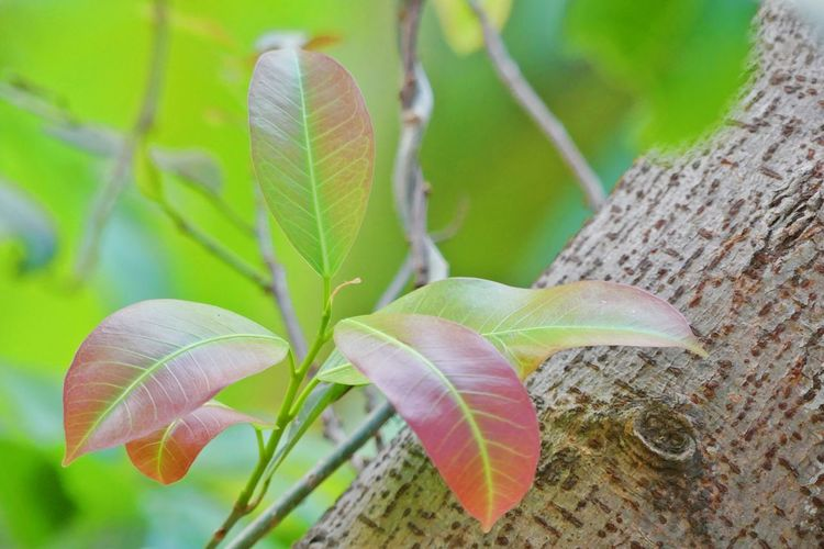 When I Growth Up! Background Backgrounds Leaf Leafs Photography Leaves🌿 Taking Photos Young Leaves ใบไม้ ใบไม้เปลี่ยนสี