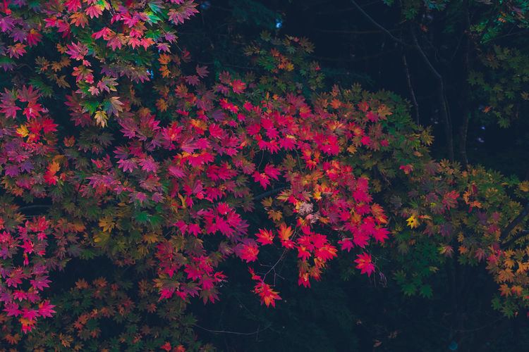 Red flowering plants during autumn