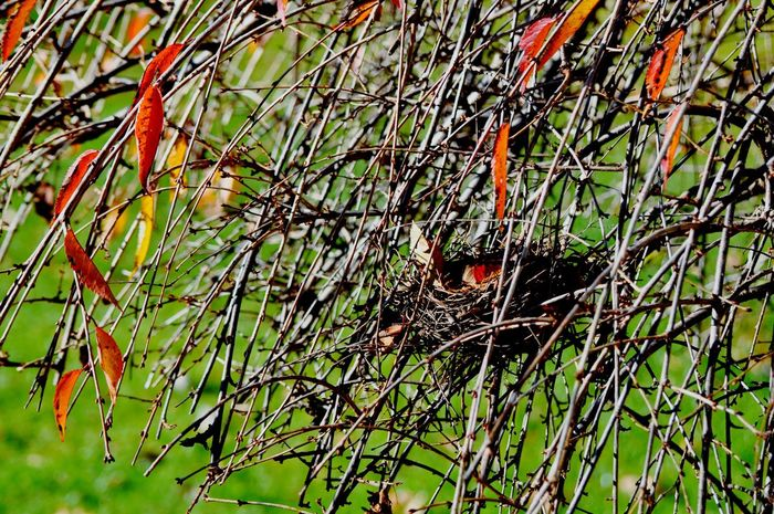 Animal Themes Nature No People Bird Animals In The Wild One Animal Outdoors Tree Day Close-up Bird Nests Jamie Brown