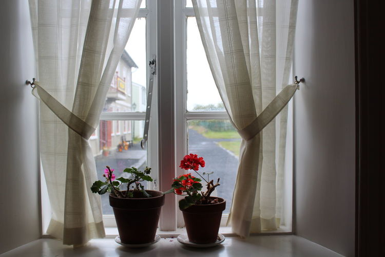 Curtain Window Plant Flower Flowering Plant Indoors  Potted Plant Nature No People Growth Day Home Interior Beauty In Nature Vase Window Sill Flower Pot Freshness Transparent Decoration Flower Head Flower Arrangement Glass Houseplant