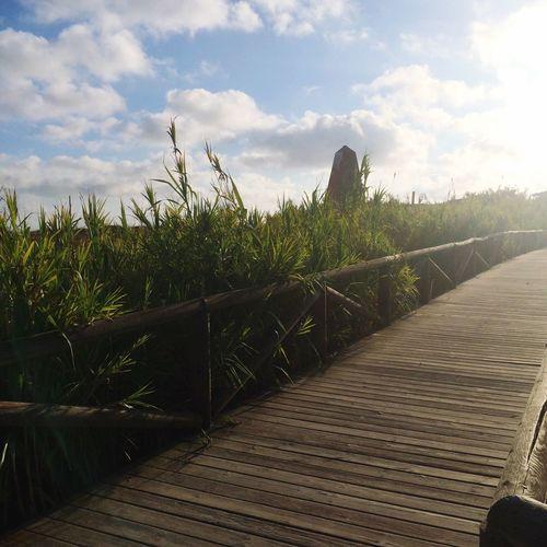 Camino de la playa Sky Nature Tranquility Cloud - Sky Grass Tranquil Scene Wood Paneling