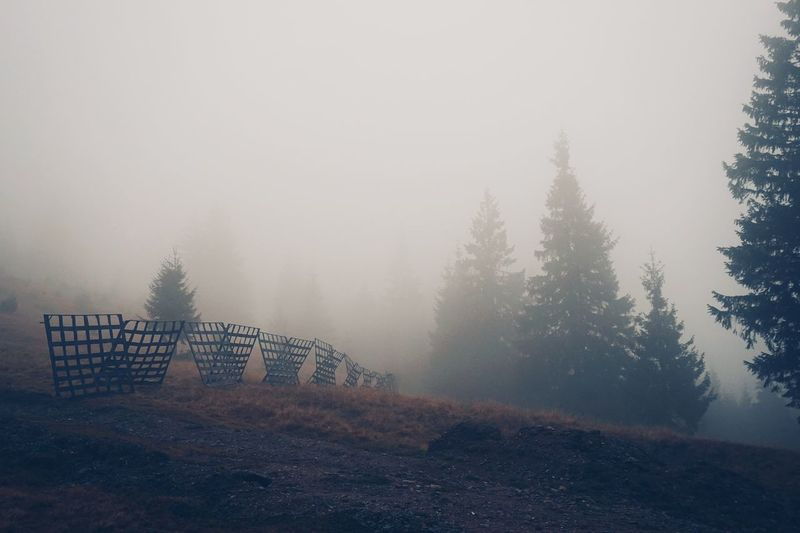 Fog_collection Foggy Morning Fog Outdoors Fence Gate Fence Photography Pinetrees🌲 Beauty In Nature Tree Trees Nature Photography Pine Tree Nature_collection EyeEm Nature Lover Nature Forest Fog In The Trees Tree Naturephotography Natural Beauty Perspectives On Nature