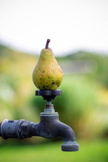 Birne Frucht Wasserhahn Grün Water Tap Pear Fruit Green Garten Focus Object