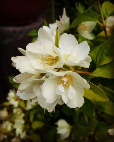 Floralphotography Floral Photography Floral Flowers,Plants & Garden Flowerphotography Flower And Garden Fresh On Eyeem