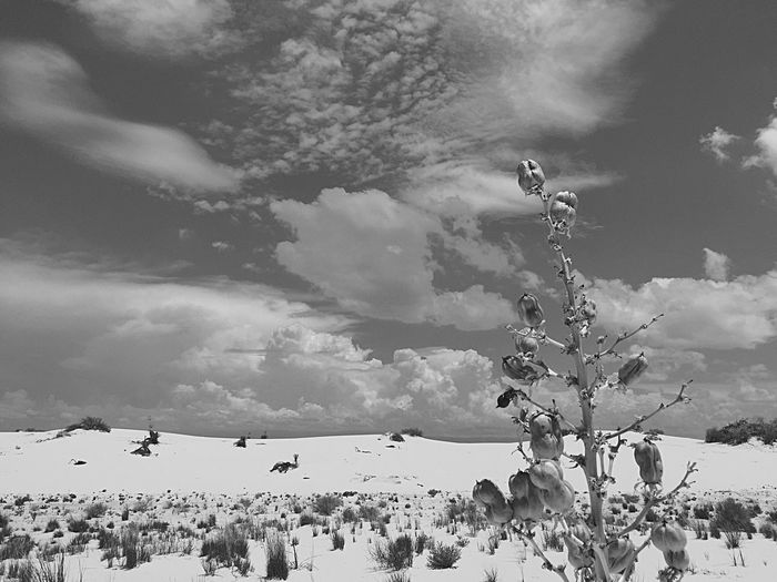 Cloud - Sky Sky Nature Outdoors Day Beauty In Nature Landscape White Sands National Monument New Mexico Mountain Scenics Tranquility Cactus Yucca