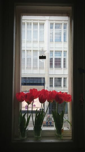 Flower Collection Flowerpower Tulips Tulips Flowers Tulipseason Red Flower Redlover Windowview