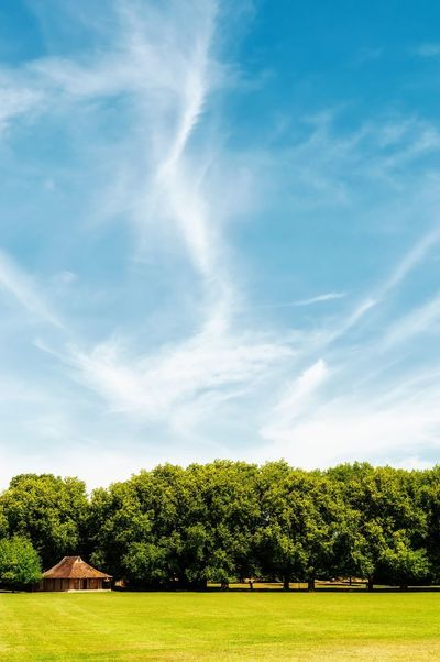 Sunny day in green park Plant Tree Sky Cloud - Sky Growth No People Nature Day Green Color Beauty In Nature Tranquility Sunlight Tranquil Scene Grass Outdoors Field Land Garden Park Scenics - Nature