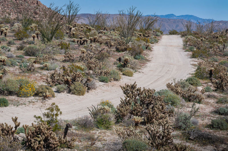Anza Borrego Desert Flowers Plant Landscape Environment Nature Scenics - Nature Desert Land Tranquil Scene Tranquility Tree Non-urban Scene Mountain No People Growth Sky Day Arid Climate Road Dirt Road Climate Outdoors Semi-arid Anza Borrego