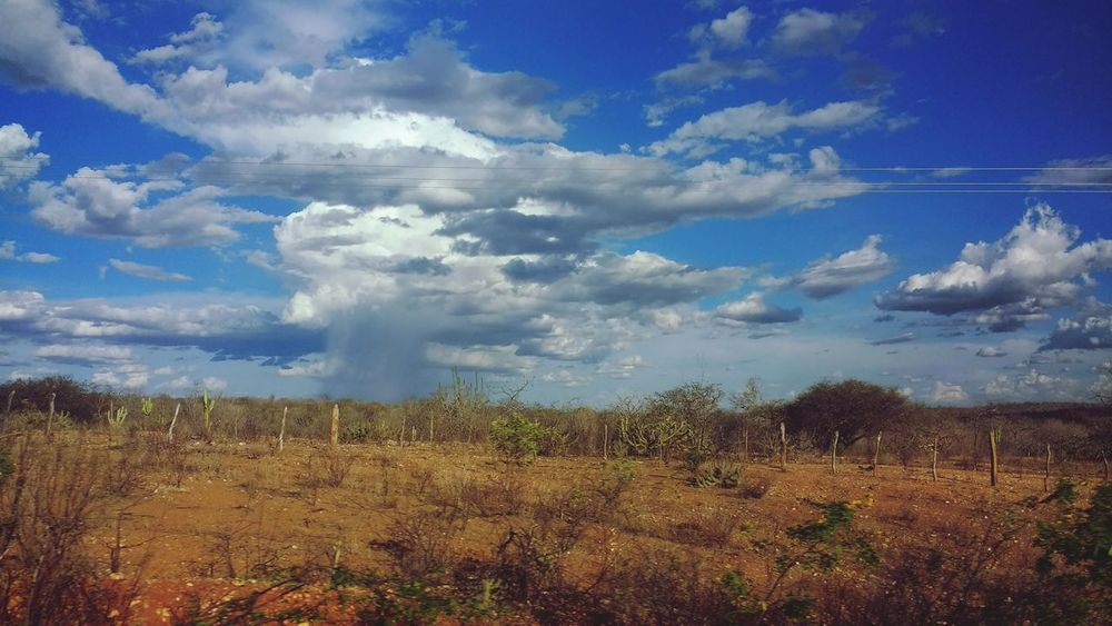 Sky Cloud - Sky Nature Water Reflection Day Outdoors No People Beauty In Nature Extreme Weather Tree Brazperil Horizon Over Water Céus E Nuvens Rural Scene Social Issues Pernambuco Brazil chuva no sertão Desert Landscape Landscape Travel