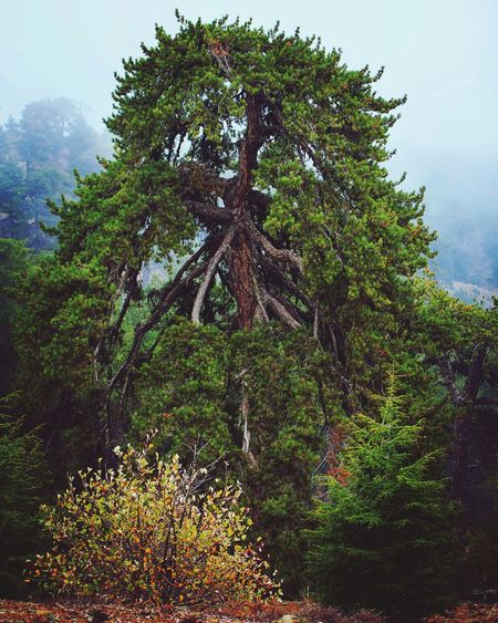 Forest In Mountain Tree Growth Nature No People Beauty In Nature Green Color Tree Trunk Day