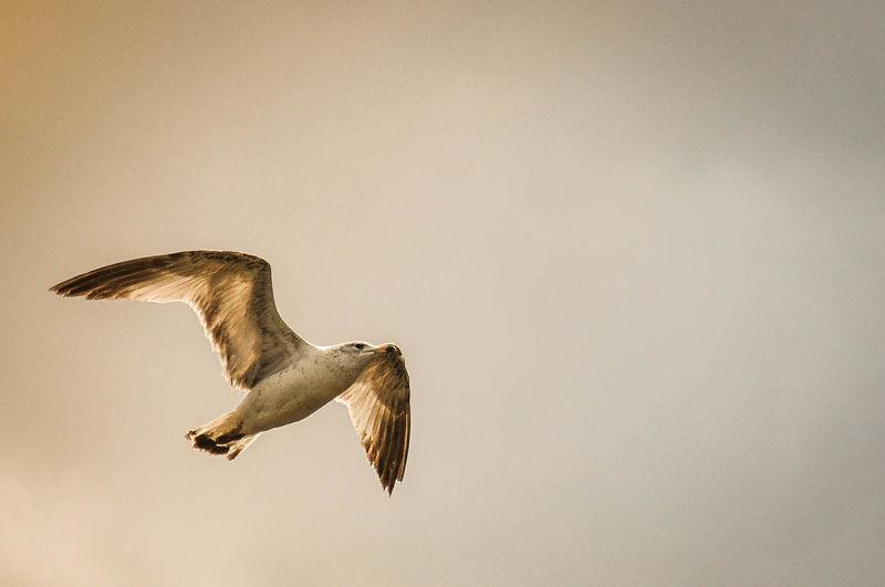 View of birds in flight