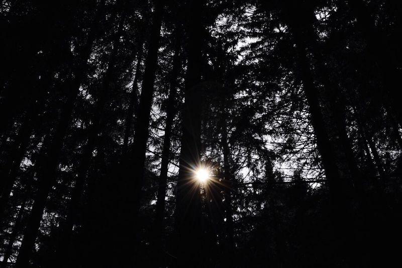 Dark and light. Dark Light Sun Darkness And Light Forest Wood Nature Art ArtWork Luce E Buio Shine Artistic Photography Photo Shadows