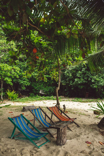 Tree Plant Land Nature Day Tranquility No People Growth Sand Absence Beauty In Nature Beach Outdoors Forest Water Nautical Vessel Tranquil Scene Hammock Green Color Transportation