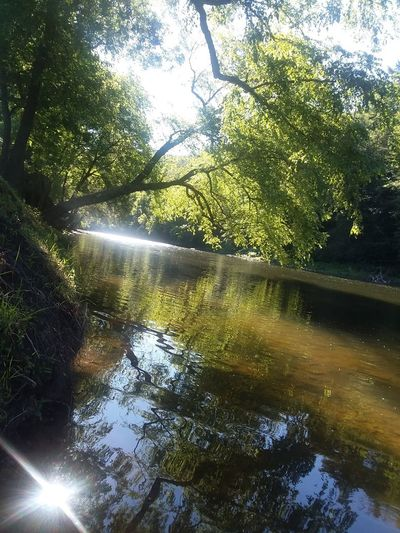 Nothing like the sun shining through the trees on a beautiful summer morning Pennsylvania Endless Mountains Fishing Summertime Nature Photography Sunshine Creek Creekside Sunbeam Reflection Trees And Nature Trees And Sky