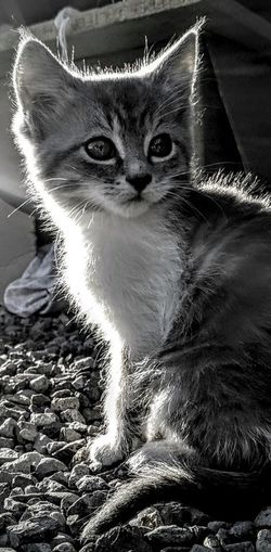 Pretty Kitty Kitten Domestic Cat Pets Domestic Animals Feline Mammal Portrait Whisker Sitting Looking At Camera Animal Themes One Animal Light Effect The Week On EyeEm Sun Day Outdoors Sunlight Glowing In The Light Kittykitty Kitty Cat Pebble Stones