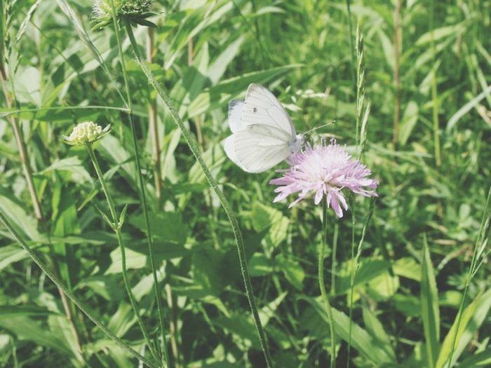 Nature My Photos Batterfly  Enjoying Life