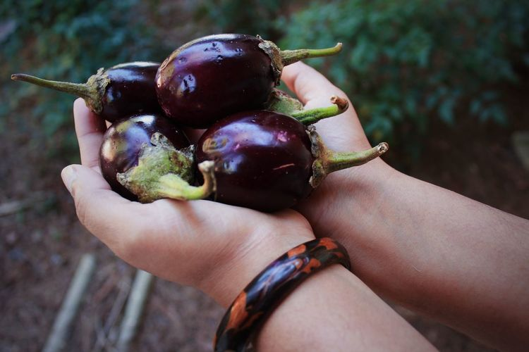Cropped Hands Holding Eggplants