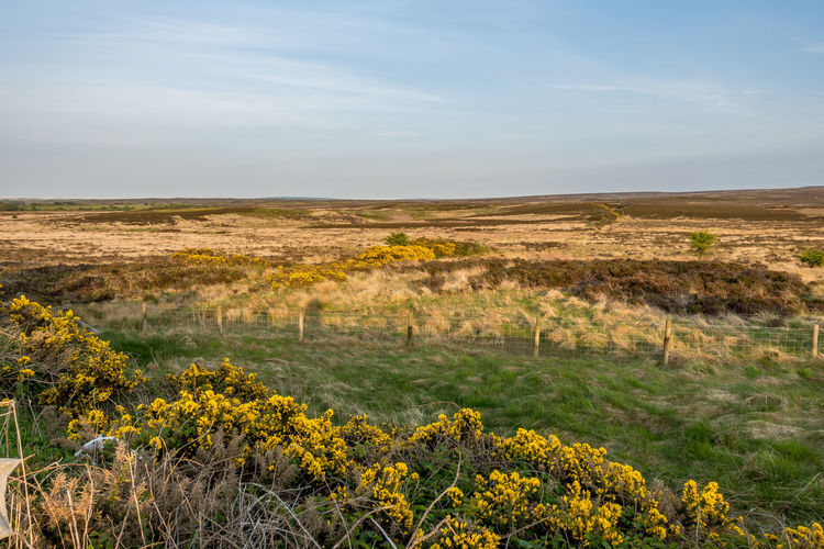 Yorkshire Moors North Yorkshire North York Moors North Yorkshire Dales Sky Landscape Environment Beauty In Nature Scenics - Nature Plant Land Tranquility Tranquil Scene Field Nature No People Growth Non-urban Scene Yellow Day Flower Cloud - Sky Horizon Flowering Plant Outdoors