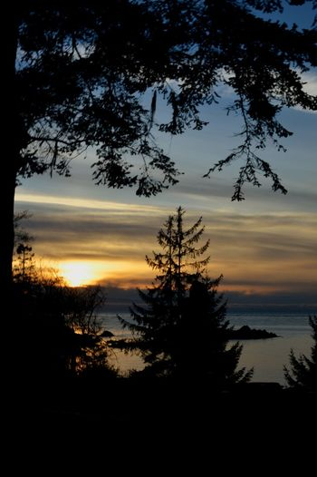 Rosario Beach Anacortes PNW PNWonderland Beauty In Nature Outside Colorful Sky Colors Winter Peaceful Quiet Moments Sunset Tree Silhouette Reflection Nature Water Scenics
