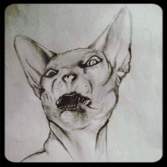 Insane cat. Cat Drawing Art Hobby