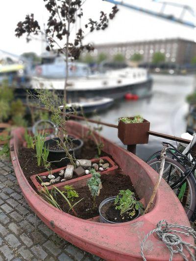 Gardenboat