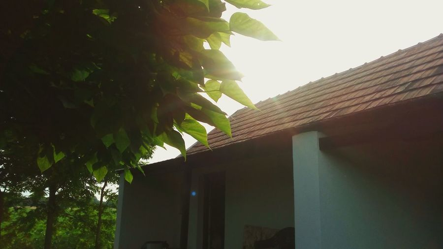 Sunshine Sunshine ☀ Tree Sunlight Leaf Beauty House Shining Sunbeam Sun Lens Flare Sunrise Sunset