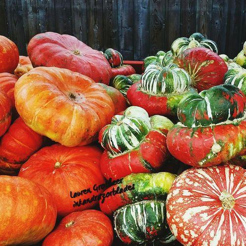 Pumpkinpatch Pumpkins Fall Pumpkin!Pumpkin! Fallbeauty Pumpkinpicking Pumpkin Plant