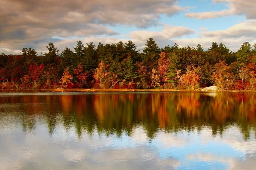 Fall Beauty Fall Colors Tree Water Plant Lake Reflection Sky Cloud - Sky