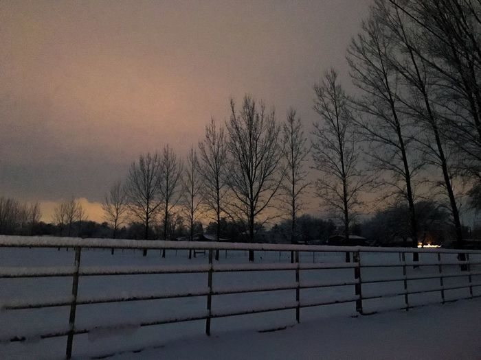 poplars Sunset Fence Winter Cold Temperature Snow Bare Tree Weather Nature Cold Beauty In Nature Branch Landscape Sky Frozen