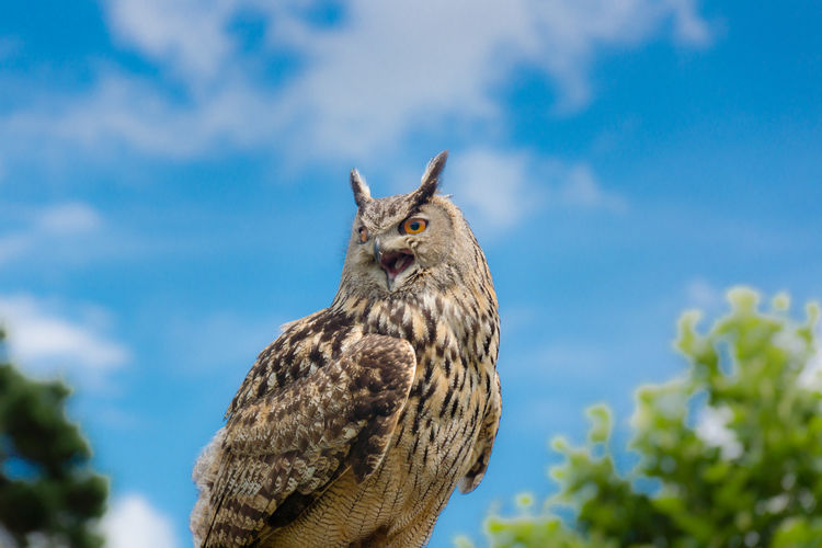 Low Angle View Of Eagle Owl Against Sky
