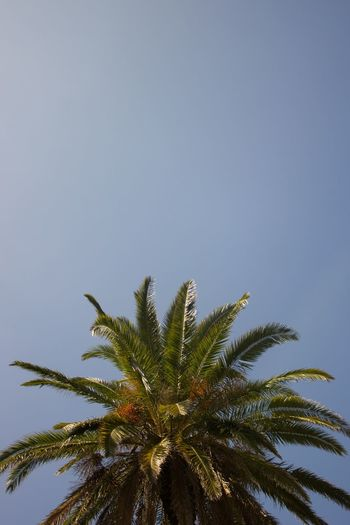 Palm Palm Sky