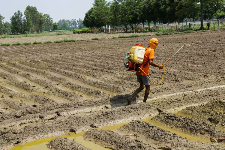Man spraying pesticides on ploughed field