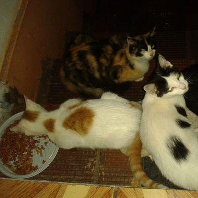 Mae, teus gatinhos estao recebendo cuidados. Voce sempre foi e sera exemplo de amor incondicional Fato Saudade