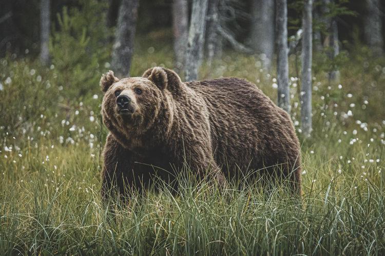 Bear standing on land