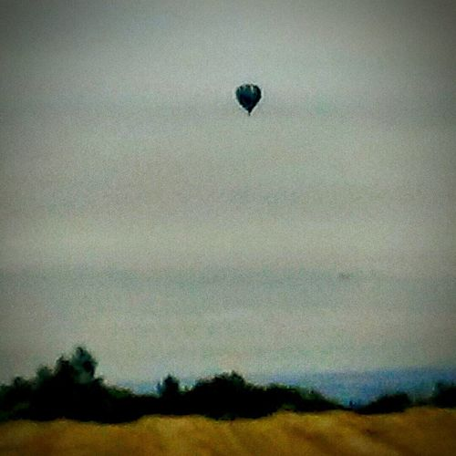On The Way home this Morning i was shooting Photographs of the Vinyard On My My Home. Without even Realizing It i had I Had Shot A Cool Photo of a Hot Air Balloon In The Distance . it turned out to be Lovely Picture Im Proud of this Shot !