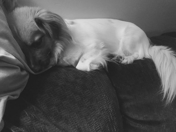 Good Night World Chewie Dog Indoors  Home Interior Sleeping No People Pet Portraits The Week On EyeEm EyeEmNewHere Black & White ✌️👽🌎😴😴