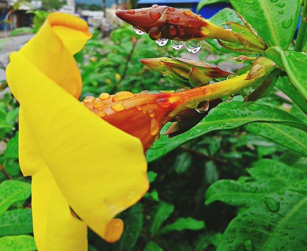 Natureza Perfeita♡♥ Coisa De Deus Flores Orvalho Gotas De Agua Gotas