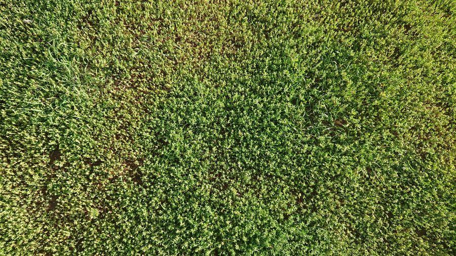 Grass Textured