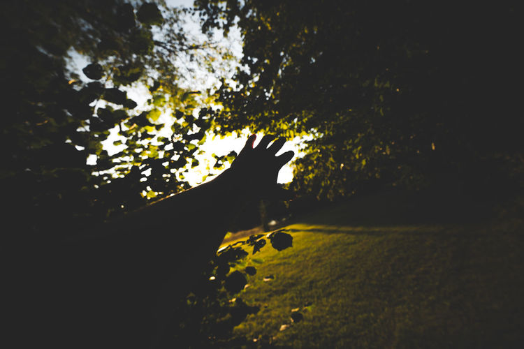 Nature Reach Summer Canon