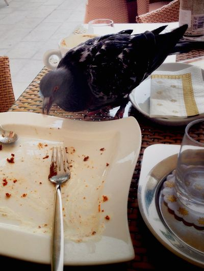 IPhoneography Streetphotography Portoroz. Hungry pigeon Grand hotel Palace