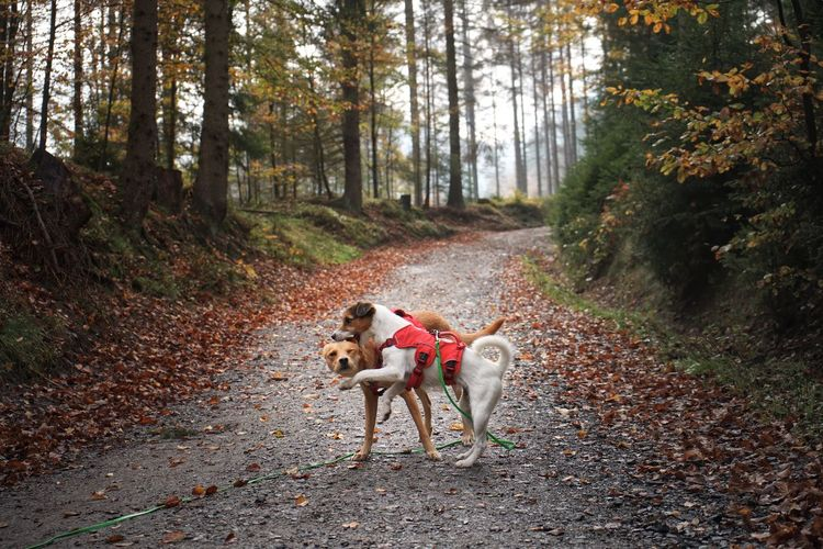 Dogs playing in forest
