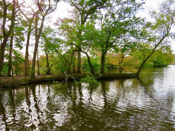 Landscape tranquil scene beauty in nature water reflections EyeEm nature lover Water Tree Reflection Tranquil Scene No People