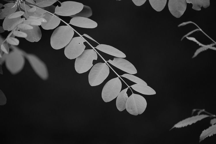 Close-up of green leaves on branch at night
