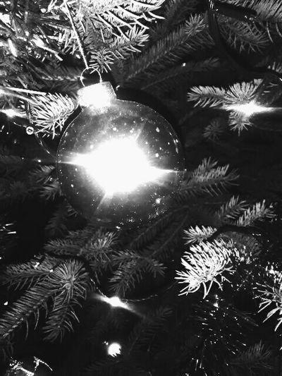 Christmas Tree Christmas Christmas Decoration Decoration Christmas Ornament Christmas Lights 😚