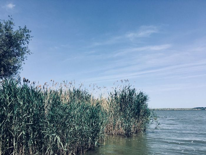 Sky Plant Water Nature Beauty In Nature Tree Scenics - Nature Cloud - Sky Tranquil Scene Horizon Over Water No People Outdoors Growth Tranquility Non-urban Scene Horizon Day Sea Blue Flock Of Birds