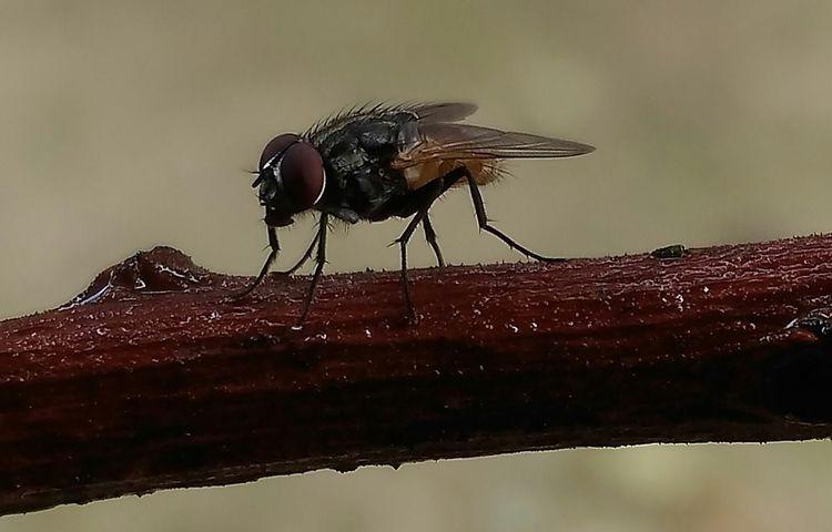 Fly.....