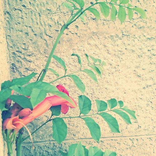 Natur Love Sun Botanibota Green Orange Flowers Flower Flower Beautiful