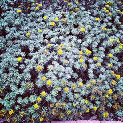 Sarı Yellow Nezahatgökyiğitbotanikbahçesi